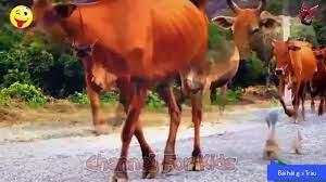 Các con vật quen thuộc cho bé ☆ con Trâu, con Bò, con Gà, con Vịt ☆ Nhạc  thiếu nhi Vui nhộn - Video Dailymotion