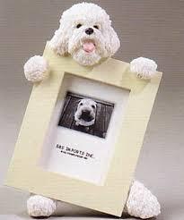 bichon frise dog photo frame 2 1 2 x