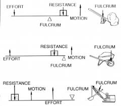 Body Levers Body Physics Motion To Metabolism