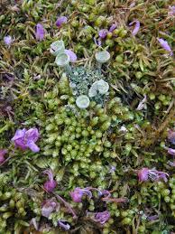 moss lichen love