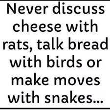 Making Moves Quotes Inspiration Rat Snitch Quotes Quotes