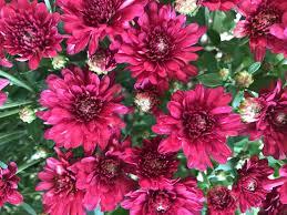 florist edmond ok cic psychoogt nd ivg okhom oves uptown grocery fl edmonds flowers san mateo