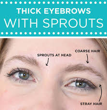 how to trim bushy eyebrows. for thick eyebrows that have \ how to trim bushy t