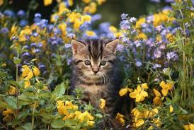 does cayenne pepper keep cats out of the garden by susan paretts though adorable that little kitty could damage your plants