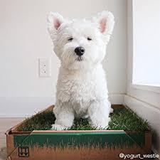 dogs bathroom grass. the original real grass dog potty dogs bathroom