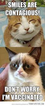 grumpy cat birthday quotes. Interesting Birthday Top 40 Most Funniest Grumpy Cat Pics Funny Quotes And Grumpy Cat Birthday Quotes M