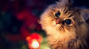 Cat wallpaper ...