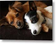 Puppy Love Photograph by Wesley Quinn