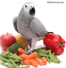 Image result for African Grey Parrot