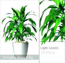 office plants no light. Exellent Office Fresh Plants That Need No Light For Office Sunlight   With Office Plants No Light