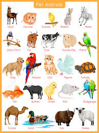 Pet Animal Picture Chart Easy To Edit Vector Illustration Of Chart Of Pet Animals