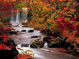 Autumn Trees Nature Landscape Leaf ...