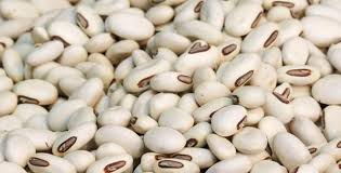 these are small oval shaped beans with ability to cook quickly also known as boston beans pea beans and the white coco they are just perfect for dishes