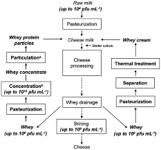 Whey Processing Flow Chart Flow Chart Of A Cheese Making Process In Which Concentrated