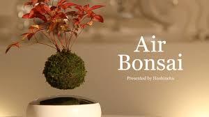 Air Bonsai | Create your