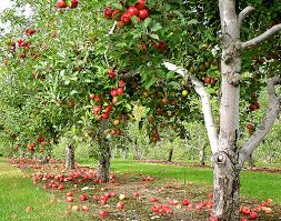 Image result for orchard images