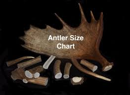 Antler Chew Size Chart Wild Country Antlers