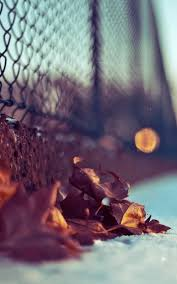 chain link fence wallpaper. Chain Link Fence Autumn Leaves Android Wallpaper