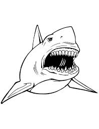 great white shark coloring pages lovely free coloring pages of white shark