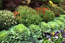 TreeHugger Fall Container Garden Plants Ramon Gonzalez