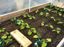garden drip system. Wonderful Garden Pressure Compensating Irrigation Emitters Emitters Are Vital For  Functioning Of The Drip System When Choosing Emitters Make Sure To Pick Ones That  To Garden Drip System M
