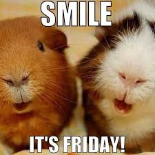 Image result for cute guinea pig sayings
