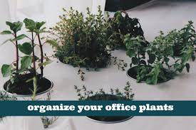 great office plants. We All Love To Add A Little \u201coomph\u201d Our Office Spaces, And Plants Are Great Way Do That. Not Only They Help You Feel More Relaxed,