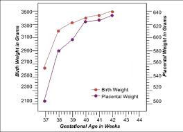 Placenta Growth Chart The Relationship Between The Weight Of The Placenta And