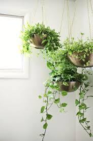 Hanging planters out of metal bowlslove this! (click through for tutorial)
