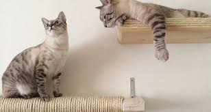 wall mounted cat furniture. Functional Cat Furniture Wall Mounted