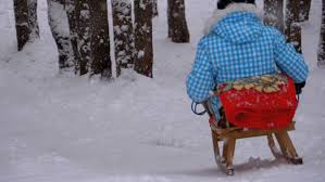 child wooden sled goes down from a snowy hill in pine forest girl falls rigidly to sled slow motion in 180 fps happy kid moves down on a sled