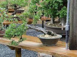 bonsai gardens. smith-gilbert gardens bonsai collection r
