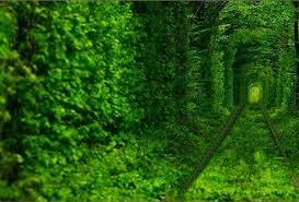 Картинки по запросу клевань. тоннель любви