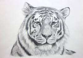 tiger face drawing pencil. Beautiful Face Tiger Pencil Sketches Sketch Face  Drawing With