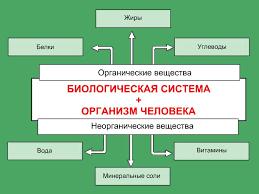 Реферат Питание и здоровье человека Предназначение и задача РСЧС  Питание и здоровье человека Предназначение и задача РСЧС