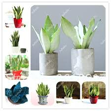 office flower pots. Plant Pots Indoor Seeds Potted Balcony Office Plants Perennial Rectangular Flower F