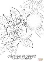Small Picture Florida State Flower coloring page Free Printable Coloring Pages