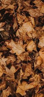 Brown Leaves Wallpapers - Top Free ...