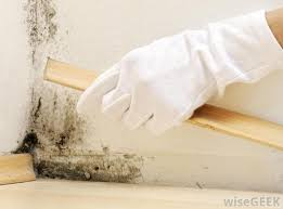 use a bleach and water solution to remove mildew and its odor