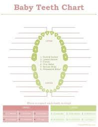 Tooth Chart For The Baby Book Baby Teething Chart Tooth