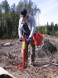 Bildresultat för bilder plantering skog