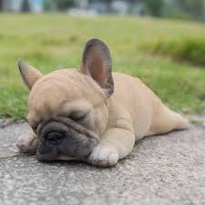 bulldog puppies sleeping. Beautiful Sleeping HiLine Gift Sleeping French Bulldog Puppy In Puppies U