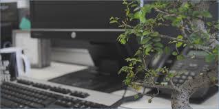 office bonsai tree. Beautiful Bonsai Don T Kill The Bonsai Tree Phil Wilkinson Pulse Intended Office