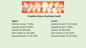 Permanent Teeth Eruption Chart Tooth Eruption Dental Health Foundation