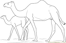 Small Picture Baby Camel with her Mother Coloring Page Free Camel Coloring