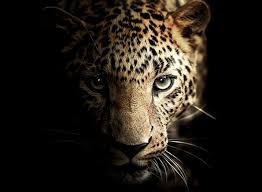 leopard glass wall decoration animal