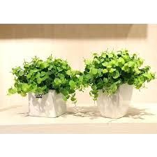 small plants for office. Small Office Plant Related Post Friendly Plants . For
