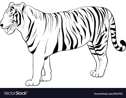 tiger drawing pictures. Delighful Drawing Tiger Drawing Vector Image In Drawing Pictures R
