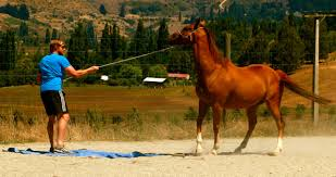 take the reins lead the way so often we reward loyalty that next promotion but who checked that that person had the skills required to be an effective team leader