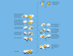 Sous Vide Egg Chart 1 Hour At These Times In 2019